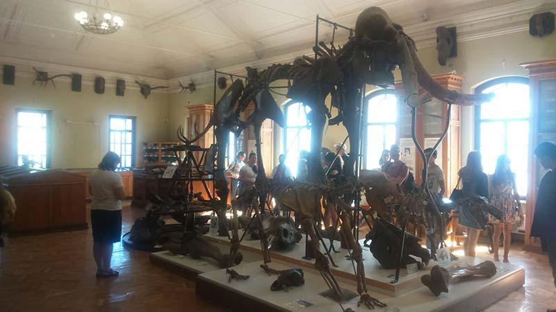 Археологический музей Казанского университета. Скелет мамонта