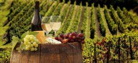 Международная конференция: «Вино в культуре – культура вина»